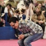 Le Salon de l'Agriculture, vitrine de la diversité des élevages de chiens et chats en France