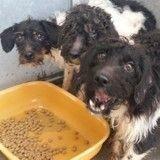 53 chiens à l'agonie sauvés d'une mort certaine grâce à la SPA