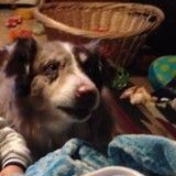 Incroyable : ce chien est capable de dire «maman» pour avoir de la nourriture ! (Vidéo du jour)
