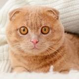 6 remèdes de grand-mère pour apaiser un chat stressé