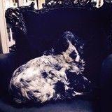 Valérie Damidot est en deuil : son chien Teuf est décédé