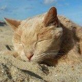 Décès de Tigger, le chat star du Web abandonné à l'âge de 20 ans