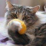 Peut-on apprendre des tours... à son chat ?