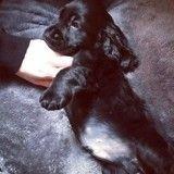 Attristée par la perte de son chien, Valérie Damidot se console dans les pattes d'un nouveau chiot
