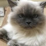 Abandonnée à l'âge de 14 ans, une chatte court vers une femme pour lui demander de l'adopter