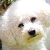 «Euthanasié», un chien réapparaît  bien vivant 8 ans après sa mort !