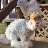 Triste nouvelle : Wally le lapin peluche le plus célèbre du Web grâce à ses grandes oreilles n'est plus