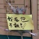 Un rat humilié sur le Web chinois… pour avoir volé du riz !