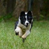 Les bons gestes à connaître si votre chien se blesse en marchant ou en courant