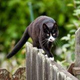 Un chat meurt après avoir été « lavé » dans une machine à laver par une fillette