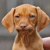 10 preuves qu'adopter un chien c'est comme adopter un mec
