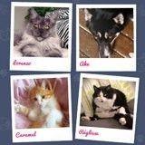 Elus «Wamiz du mois», ces 7 chats et chiens sont vos préférés !