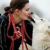 Des chiens condamnés à mort par les autorités françaises en raison  de leur ressemblance avec le loup