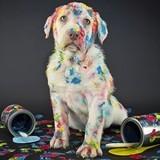 Les bonnes résolutions de nos chiens et chats pour 2018