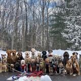 Ces 28 chiens font leur balade ensemble chaque jour et c'est bien trop mignon