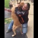 Les émouvantes retrouvailles d'un chien et son maître après deux ans de séparation (Vidéo du jour)