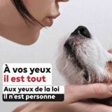 Vers un statut de « personne animale » pour les animaux en France ?