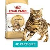 Testez les croquettes  Adult Bengal de Royal Canin