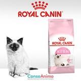 Testez ROYAL CANIN Kitten avec votre chaton
