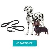 Testez la laisse d'éducation Halti avec votre chien