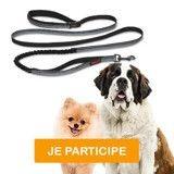 Testez la laisse Halti All-In-One pour votre chien !