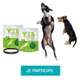 Testez le collier YOOS pour chiens à mobilité réduite !
