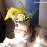 Winkelhimer, l'écureuil handicapé devenu peintre (Photos et vidéo)