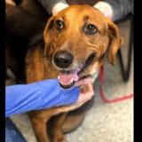 Après 525 jours dans un refuge, ce chien a enfin été adopté