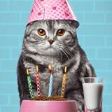 Voilà le secret des chats qui vivent plus de 20 ans !