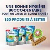 Testez les bâtonnets à mâcher pour chiens PURINA Dentalife®