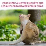 Enquête sur les traitements anti-parasitaires pour chats
