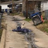 Abandonné au Nouvel An, ce chien refuse d'abandonner sa couverture