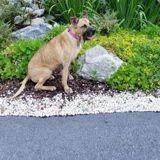 Après avoir adopté les deux plus vieux chiens du refuge, elle prend une décision qui laisse sans voix