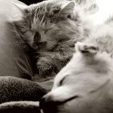 20 bébés animaux qui s'endorment dans des endroits insolites (Photos)