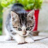 Les 20 chatons les plus mignons (Photos)