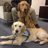 Des chiens au chevet des victimes des attentats de Boston
