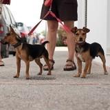 Où promener son chien à Paris ? Liste des parcs et jardins autorisés