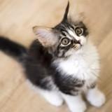 7 choses à ne JAMAIS faire avec son chat