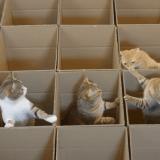 Envie de faire plaisir à vos chats ? Construisez-leur un paradis comme celui-là ! (Vidéo du jour)