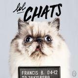 LolChats : la vie secrète des chats révélée dans un livre très... lol !