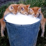 Les 9 commandements de l'alimentation d'un chat choyé