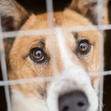 Et si adopter un animal vous permettait de payer moins d'impôts ?