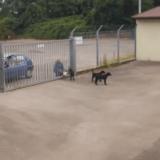 La SPA de Mulhouse choque les internautes en publiant les images d'un abandon