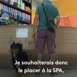« C'était une peluche » : Il abandonne son chien à la SPA et explique pourquoi (Vidéo)
