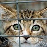 Un chat, un chien, une fillette et un garçon abandonnés : lequel sera sauvé en premier ?