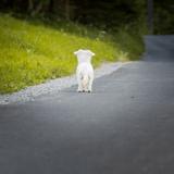 Sur la route pour rentrer chez eux, ils font une découverte effrayante !