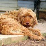 SPA : « Les causes d'abandons d'animaux sont souvent farfelues » (Interview)