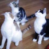 Les chats qui dansent (Vidéo du jour)