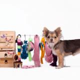 Bottines, protège-griffes… Tous ces accessoires qui vont à l'encontre du bien-être animal