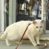 Coupe du monde 2018 : Faites connaissance avec Achille, le chat pronostiqueur officiel